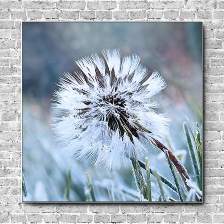 Stoffklang Akustikbild Quadrat Wand Frost auf Pusteblume