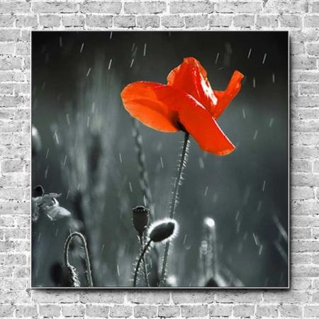 Stoffklang Akustikbild Quadrat Wand Mohn einzelne Blüte
