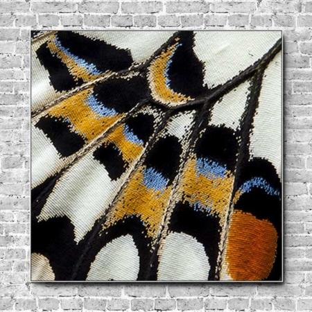 Akustikbild Schmetterling Flügel Quadrat