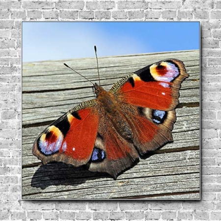 Stoffklang Akustikbild Quadrat Wand Schmetterling Tagpfauenauge auf Holz