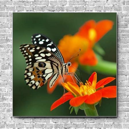 Akustikbild Schmetterling auf Blüte Quadrat