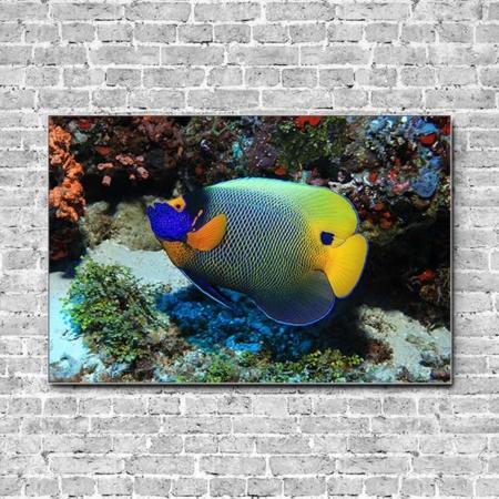 Stoffklang Akustikbild Querformat Wand Blaukopf-Kaiserfisch