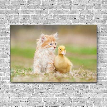 Akustikbild Kätzchen und Entenküken Querformat