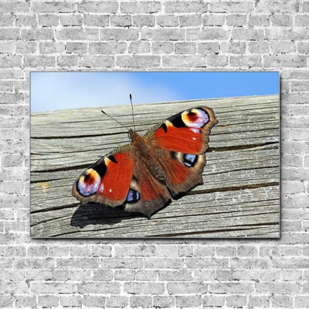Stoffklang Akustikbild Querformat Wand Schmetterling Tagpfauenauge auf Holz