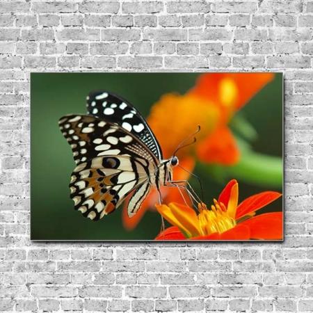 Stoffklang Akustikbild Querformat Wand Schmetterling auf roter Blüte
