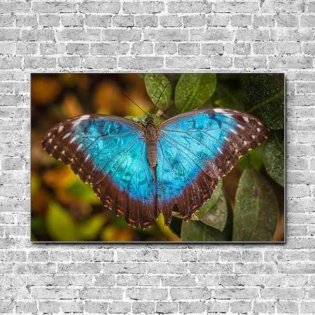 Stoffklang Akustikbild Querformat Wand Schmetterling blauer Morphofalter