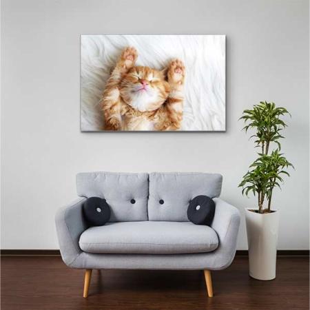 Akustikbild Kätzchen auf Rücken Querformat