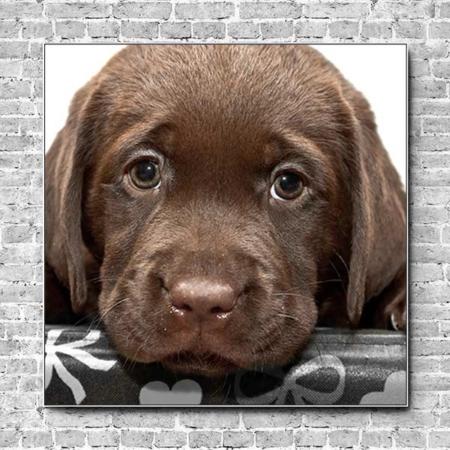 Akustikbild brauner Hundewelpe Quadrat