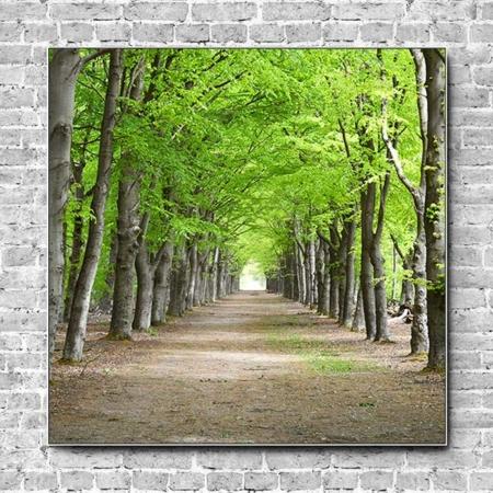 Akustikbild Waldweg Baumallee Quadrat