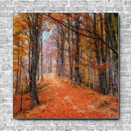Stoffklang Akustikbild Quadrat Wand Waldweg rot orange