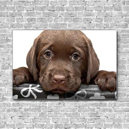 Stoffklang Akustikbild Querformat Wand Tierbabys Hundewelpe braun