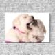Akustikbild weiße Hundewelpen Querformat